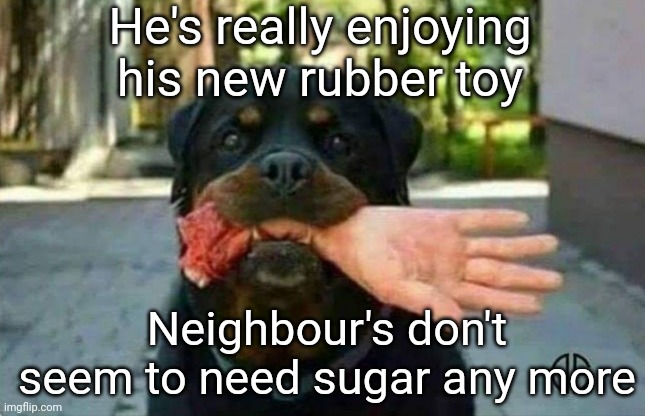 Satisfying Rubber Toy |  He's really enjoying his new rubber toy; Neighbour's don't seem to need sugar any more | image tagged in rubber ducks,toy,neighbor,sugar | made w/ Imgflip meme maker