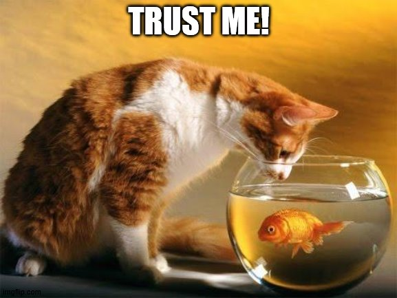 Trust me |  TRUST ME! | image tagged in cat meme | made w/ Imgflip meme maker
