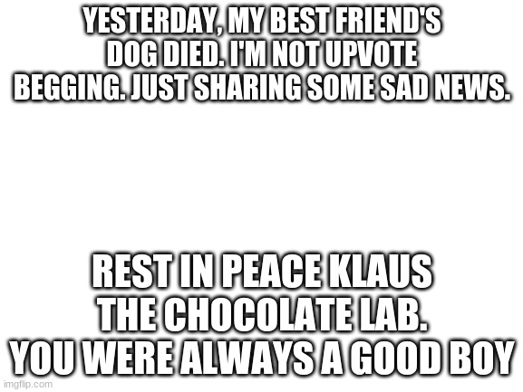 R.I.P. Klaus |  YESTERDAY, MY BEST FRIEND'S DOG DIED. I'M NOT UPVOTE BEGGING. JUST SHARING SOME SAD NEWS. REST IN PEACE KLAUS THE CHOCOLATE LAB. YOU WERE ALWAYS A GOOD BOY | image tagged in blank white template | made w/ Imgflip meme maker