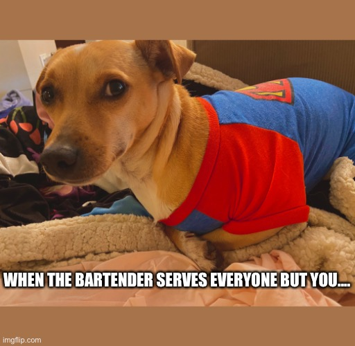 Impatient dog |  WHEN THE BARTENDER SERVES EVERYONE BUT YOU.... | image tagged in mad dog | made w/ Imgflip meme maker