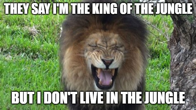 The King |  THEY SAY I'M THE KING OF THE JUNGLE; BUT I DON'T LIVE IN THE JUNGLE | image tagged in jungle,memes,fun,funny,cats,lions | made w/ Imgflip meme maker