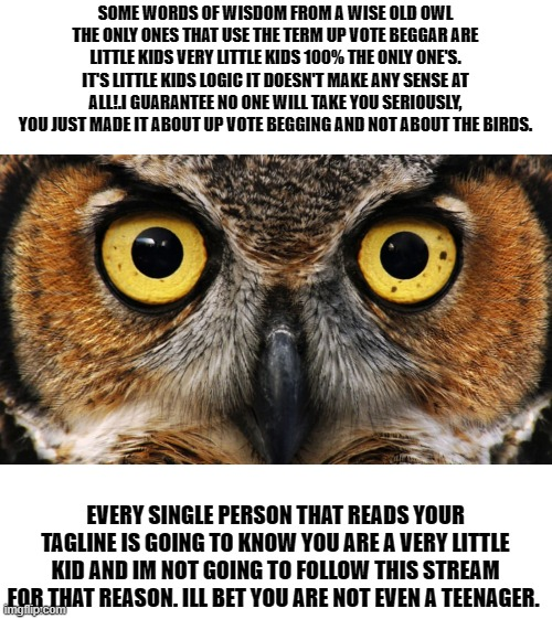 wise old owl |  SOME WORDS OF WISDOM FROM A WISE OLD OWL THE ONLY ONES THAT USE THE TERM UP VOTE BEGGAR ARE LITTLE KIDS VERY LITTLE KIDS 100% THE ONLY ONE'S. IT'S LITTLE KIDS LOGIC IT DOESN'T MAKE ANY SENSE AT ALL!.I GUARANTEE NO ONE WILL TAKE YOU SERIOUSLY, YOU JUST MADE IT ABOUT UP VOTE BEGGING AND NOT ABOUT THE BIRDS. EVERY SINGLE PERSON THAT READS YOUR TAGLINE IS GOING TO KNOW YOU ARE A VERY LITTLE KID AND IM NOT GOING TO FOLLOW THIS STREAM FOR THAT REASON. ILL BET YOU ARE NOT EVEN A TEENAGER. | image tagged in owl,up vote begger,special kind of stupid | made w/ Imgflip meme maker