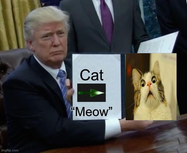 "??? |  Cat; ""Meow"" 