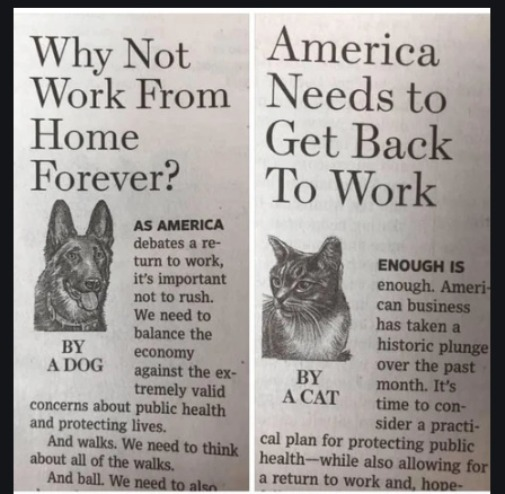 Dog vs Cat | image tagged in cats,dogs,work,memes,fun,funny | made w/ Imgflip meme maker