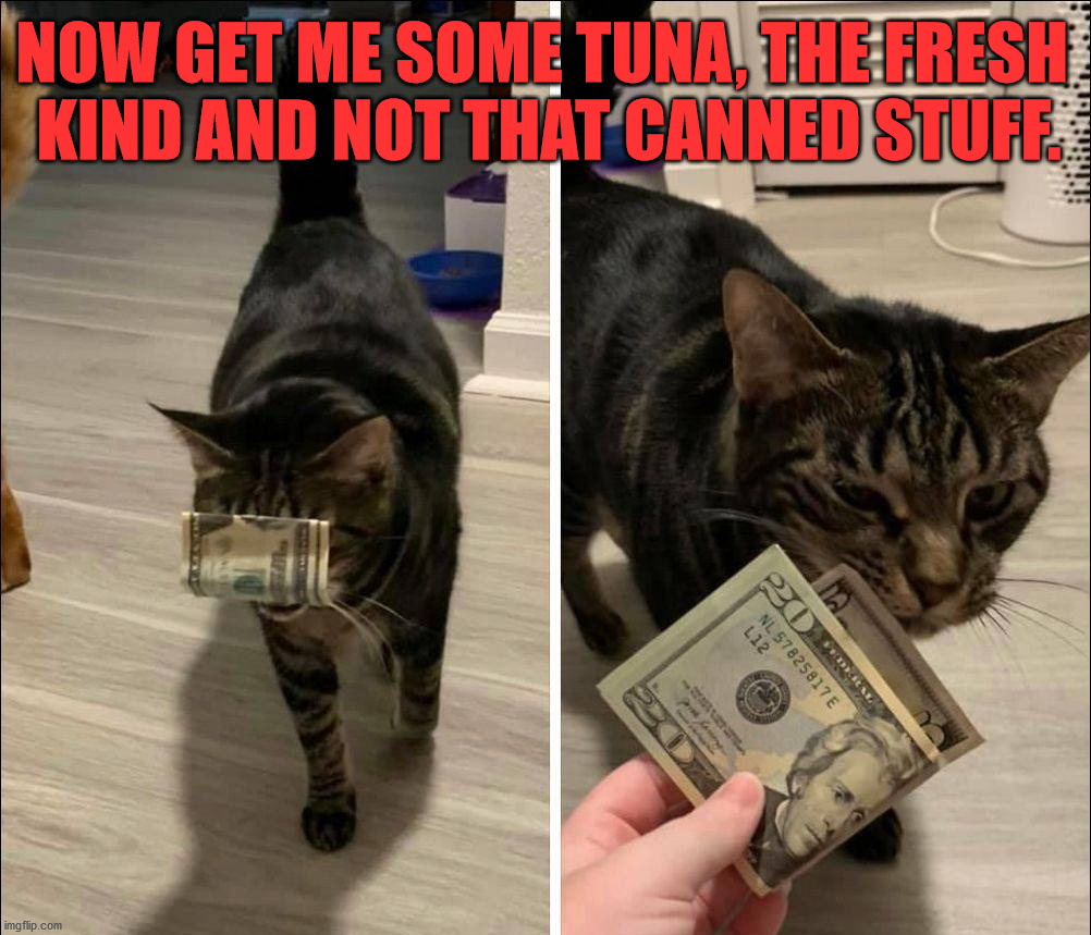 Tiger wants fresh fish. |  NOW GET ME SOME TUNA, THE FRESH  KIND AND NOT THAT CANNED STUFF. | image tagged in cats | made w/ Imgflip meme maker