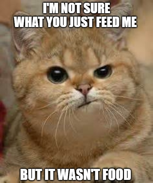 No so |  I'M NOT SURE WHAT YOU JUST FEED ME; BUT IT WASN'T FOOD | image tagged in cats,memes,fun,funny,food | made w/ Imgflip meme maker
