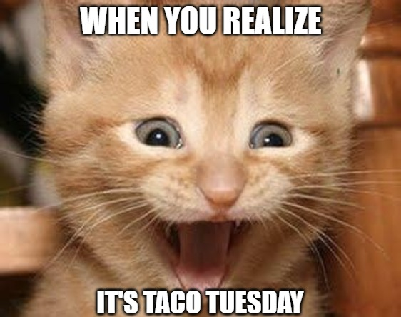 Tacos |  WHEN YOU REALIZE; IT'S TACO TUESDAY | image tagged in tacos,memes,cats,fun,funny | made w/ Imgflip meme maker