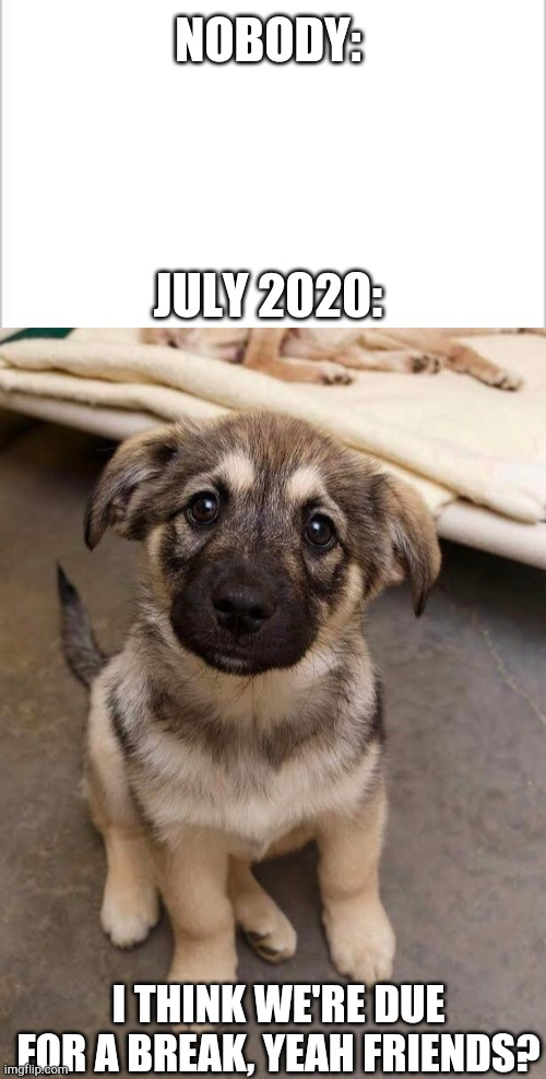 Finally |  NOBODY:; JULY 2020:; I THINK WE'RE DUE FOR A BREAK, YEAH FRIENDS? | image tagged in pupper,doggo,cute,adorable,yay,happiness | made w/ Imgflip meme maker