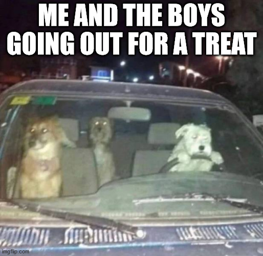 They are good boys. |  ME AND THE BOYS GOING OUT FOR A TREAT | image tagged in dogs,driving,me and the boys,treats | made w/ Imgflip meme maker