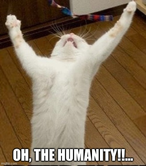 Oh, the Humanity!!... |  OH, THE HUMANITY!!... | image tagged in cats,hindenburg,famous quotes | made w/ Imgflip meme maker