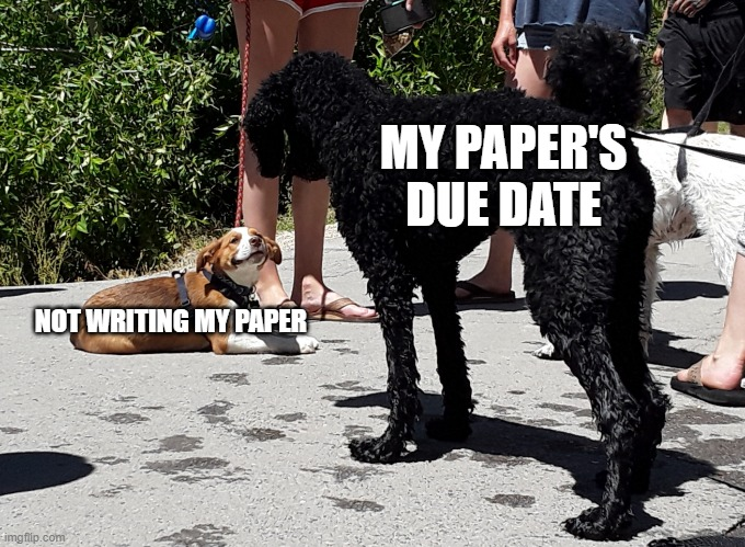 Dog meme |  MY PAPER'S DUE DATE; NOT WRITING MY PAPER | image tagged in dog meme | made w/ Imgflip meme maker