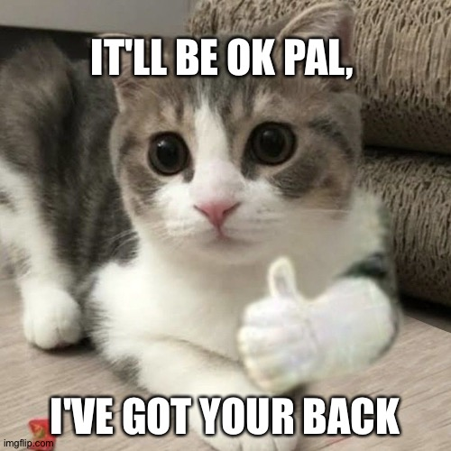 Friends |  IT'LL BE OK PAL, I'VE GOT YOUR BACK | image tagged in cats | made w/ Imgflip meme maker