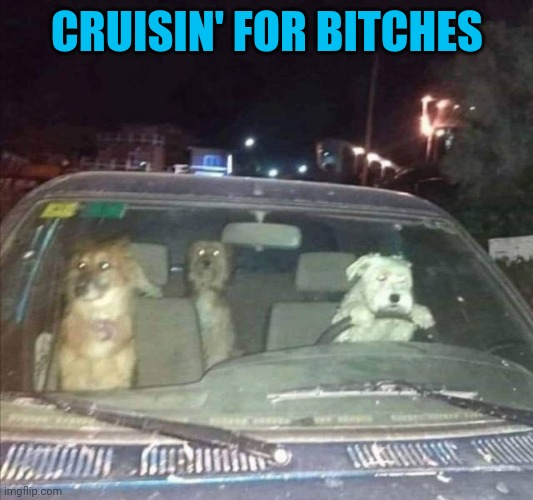 Joyride | CRUISIN' FOR BITCHES | image tagged in joyride | made w/ Imgflip meme maker