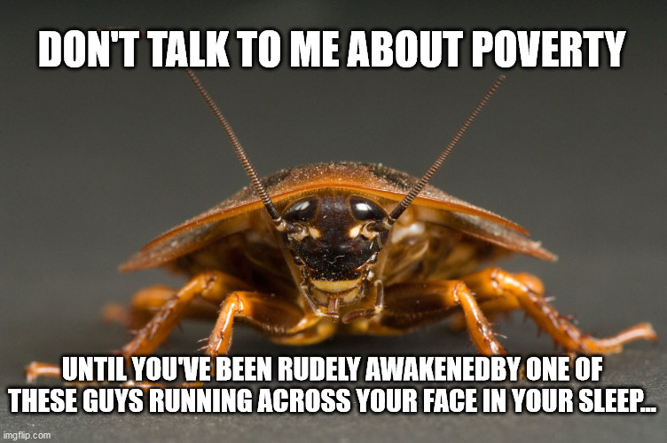 Cockroach |  DON'T TALK TO ME ABOUT POVERTY; UNTIL YOU'VE BEEN RUDELY AWAKENEDBY ONE OF THESE GUYS RUNNING ACROSS YOUR FACE IN YOUR SLEEP... | image tagged in cockroach | made w/ Imgflip meme maker