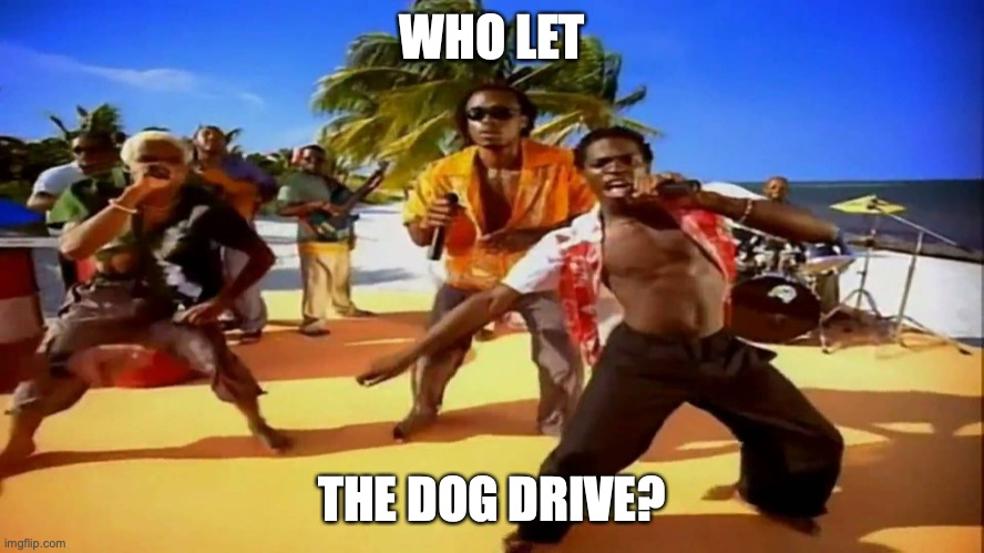 Who let the dogs out  | WHO LET THE DOG DRIVE? | image tagged in who let the dogs out | made w/ Imgflip meme maker