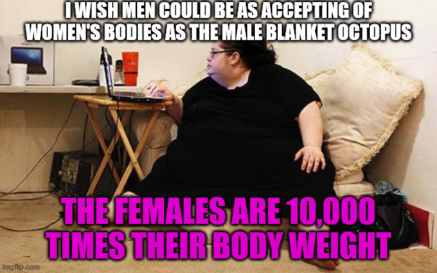Obese Woman at Computer |  I WISH MEN COULD BE AS ACCEPTING OF WOMEN'S BODIES AS THE MALE BLANKET OCTOPUS; THE FEMALES ARE 10,000 TIMES THEIR BODY WEIGHT | image tagged in obese woman at computer,fat,octopus,women,body,weight | made w/ Imgflip meme maker