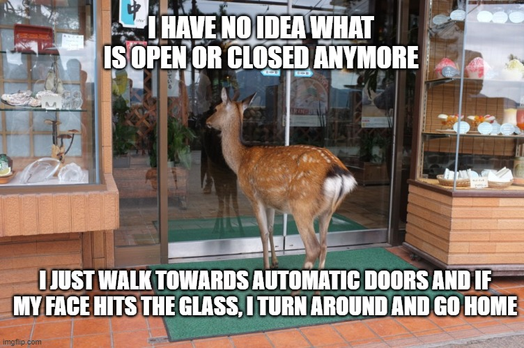 What is open and what is closed? It changes everyday! |  I HAVE NO IDEA WHAT IS OPEN OR CLOSED ANYMORE; I JUST WALK TOWARDS AUTOMATIC DOORS AND IF MY FACE HITS THE GLASS, I TURN AROUND AND GO HOME | image tagged in deer,closed,open,coronavirus,memes,funny | made w/ Imgflip meme maker