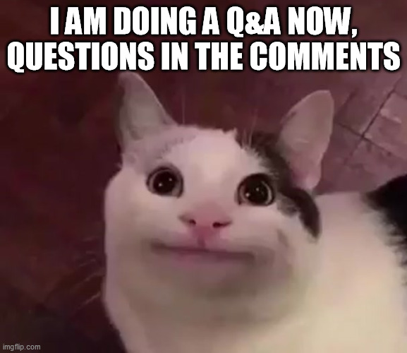 Awkward Cat |  I AM DOING A Q&A NOW, QUESTIONS IN THE COMMENTS | image tagged in awkward cat | made w/ Imgflip meme maker