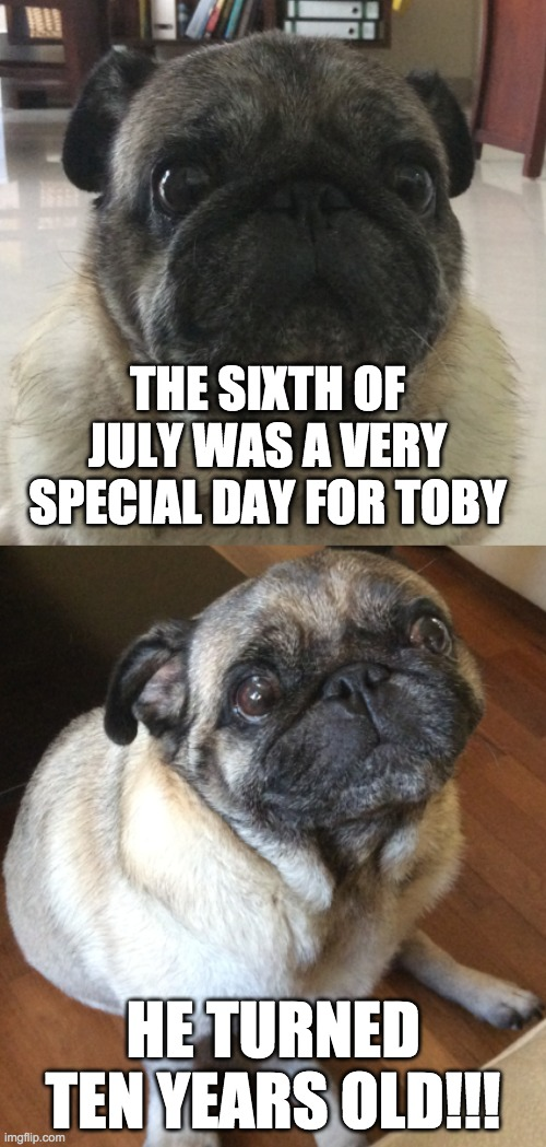 Toby is now sixty in pug years |  THE SIXTH OF JULY WAS A VERY SPECIAL DAY FOR TOBY; HE TURNED TEN YEARS OLD!!! | image tagged in memes,dogs,pugs,happy birthday | made w/ Imgflip meme maker