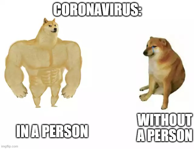 Im wrong? |  CORONAVIRUS:; IN A PERSON; WITHOUT A PERSON | image tagged in buff doge vs cheems | made w/ Imgflip meme maker