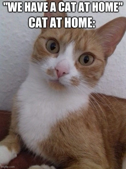 "Awkward cat at home |  ""WE HAVE A CAT AT HOME""; CAT AT HOME: 