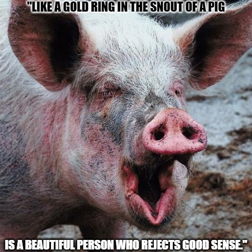 "Gold Ring |  ""LIKE A GOLD RING IN THE SNOUT OF A PIG; IS A BEAUTIFUL PERSON WHO REJECTS GOOD SENSE."" 