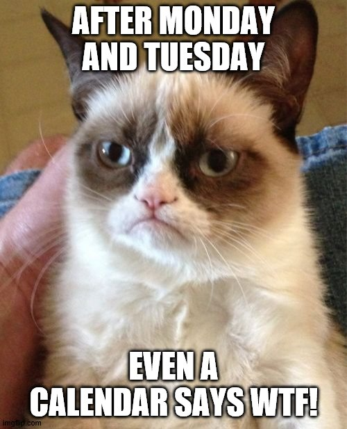 Grumpy cat |  AFTER MONDAY AND TUESDAY; EVEN A CALENDAR SAYS WTF! | image tagged in memes,grumpy cat,funny cat memes | made w/ Imgflip meme maker