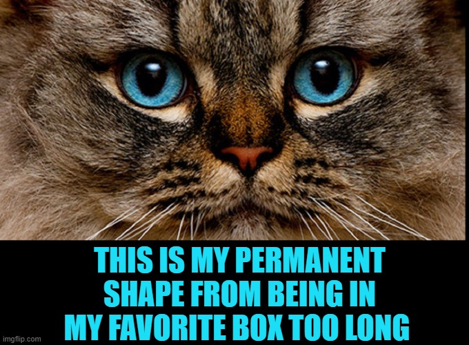 Never Believe a Shape-Shifter Cat |  THIS IS MY PERMANENT SHAPE FROM BEING IN MY FAVORITE BOX TOO LONG | image tagged in vince vance,cats,cat in a box,shapeshifter,funny cat memes,meow | made w/ Imgflip meme maker