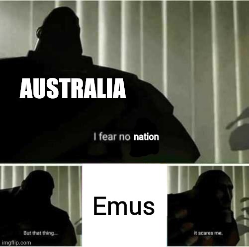 Emu War |  AUSTRALIA; nation; Emus | image tagged in i fear no man,memes,funny,australia | made w/ Imgflip meme maker