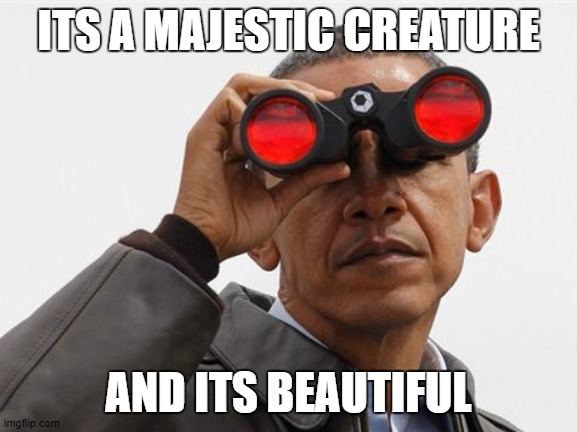 ITS A MAJESTIC CREATURE AND ITS BEAUTIFUL | image tagged in obama binoculars | made w/ Imgflip meme maker