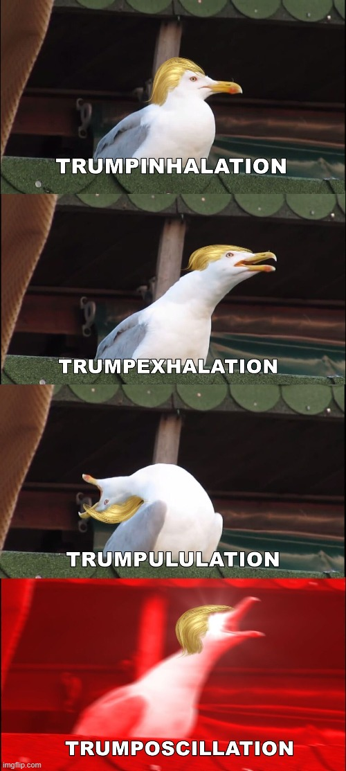 Trump Talk | image tagged in donald trump,inhaling seagull | made w/ Imgflip meme maker