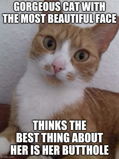 The most beautiful cat in the world |  GORGEOUS CAT WITH THE MOST BEAUTIFUL FACE; THINKS THE BEST THING ABOUT HER IS HER BUTTHOLE | image tagged in awkward cat,funny cat memes,beauty,cute cat,cat weekend,butthole | made w/ Imgflip meme maker