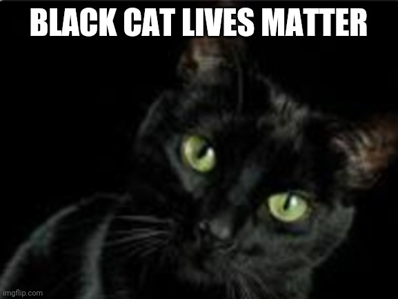 Black cat lives matter |  BLACK CAT LIVES MATTER | image tagged in black cat,lives matter | made w/ Imgflip meme maker