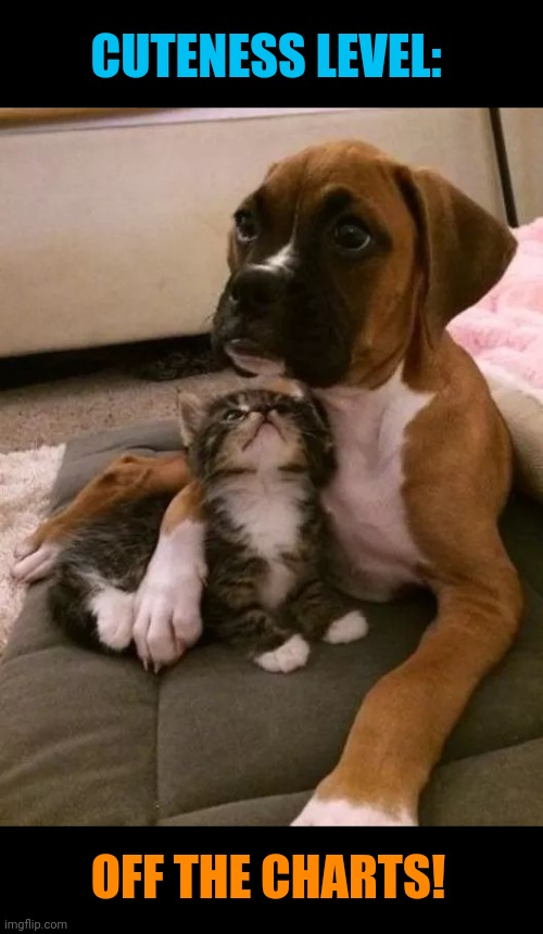 Puppy and kitten |  CUTENESS LEVEL:; OFF THE CHARTS! | image tagged in cute puppies,cute kittens,cuteness overload,cats and dogs living together | made w/ Imgflip meme maker
