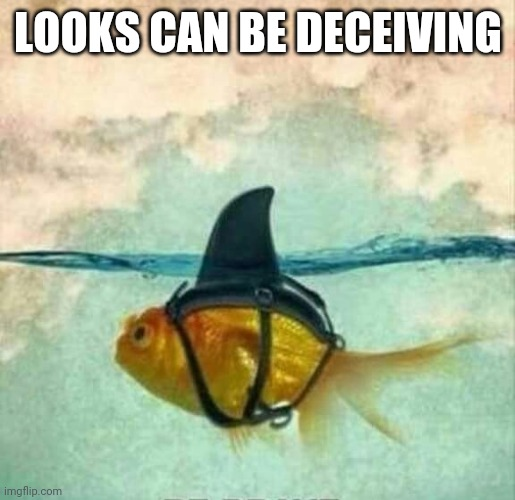 Goldfish Shark | LOOKS CAN BE DECEIVING | image tagged in goldfish shark | made w/ Imgflip meme maker