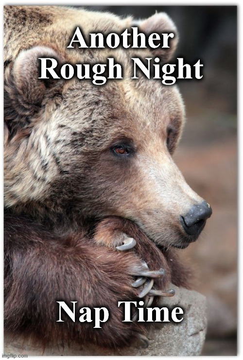 Another Rough Night; Nap Time | image tagged in bear | made w/ Imgflip meme maker