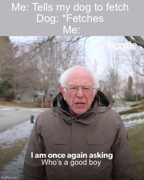 Bernie I Am Once Again Asking For Your Support |  Me: Tells my dog to fetch  Dog: *Fetches  Me:; Who's a good boy | image tagged in memes,bernie i am once again asking for your support,dogs,good boy,funny memes | made w/ Imgflip meme maker