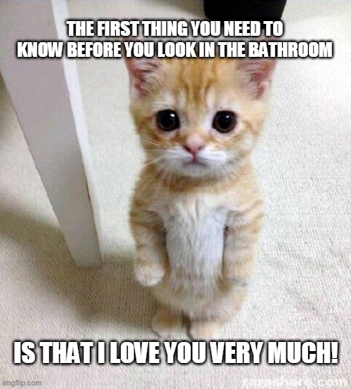 Cute Cat |  THE FIRST THING YOU NEED TO KNOW BEFORE YOU LOOK IN THE BATHROOM; IS THAT I LOVE YOU VERY MUCH! | image tagged in memes,cute cat | made w/ Imgflip meme maker