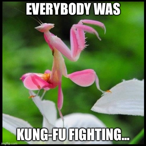 Them Zoraks was fast like lightning! |  EVERYBODY WAS; KUNG-FU FIGHTING... | image tagged in praying mantis,kung fu,song lyrics,insects,memes,animals | made w/ Imgflip meme maker