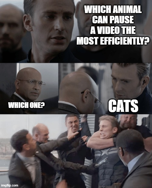 hehehehehe....:] |  WHICH ANIMAL CAN PAUSE A VIDEO THE MOST EFFICIENTLY? CATS; WHICH ONE? | image tagged in captain america elevator | made w/ Imgflip meme maker
