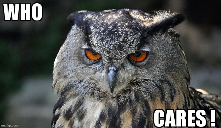 Mr Owl is not interested | image tagged in who cares,owl | made w/ Imgflip meme maker