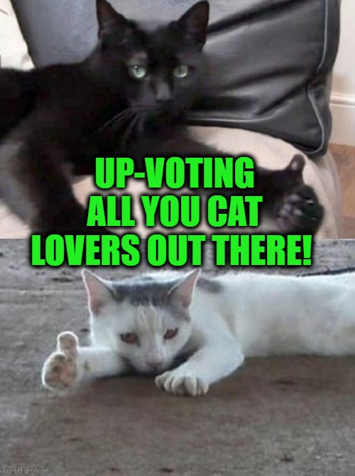 Meow.... |  UP-VOTING ALL YOU CAT LOVERS OUT THERE! | image tagged in cats,funny cats,lol,meow,love | made w/ Imgflip meme maker