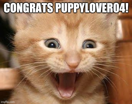 Excited Cat |  CONGRATS PUPPYLOVER04! | image tagged in memes,excited cat | made w/ Imgflip meme maker