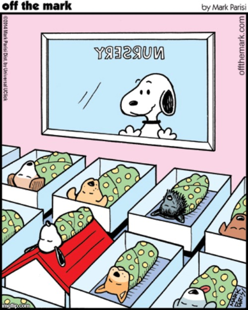 if Snoopy EVER had puppies..... | image tagged in puppies,aww,so cute,comics/cartoons,snoopy,peanuts | made w/ Imgflip meme maker
