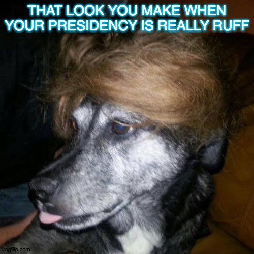 Peekaboo |  THAT LOOK YOU MAKE WHEN YOUR PRESIDENCY IS REALLY RUFF | image tagged in peekaboo | made w/ Imgflip meme maker