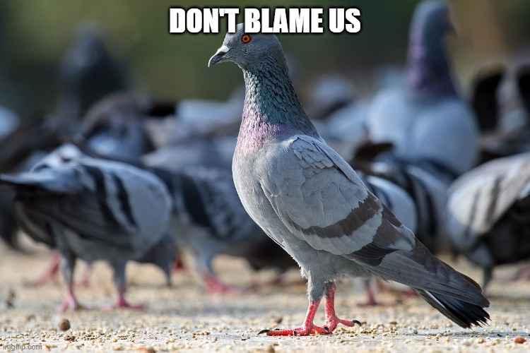 DON'T BLAME US | made w/ Imgflip meme maker