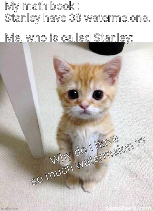 Wotarmelon |  My math book : Stanley have 38 watermelons. Me, who is called Stanley:; Why do I have so much watermelon ?? | image tagged in memes,cute cat | made w/ Imgflip meme maker