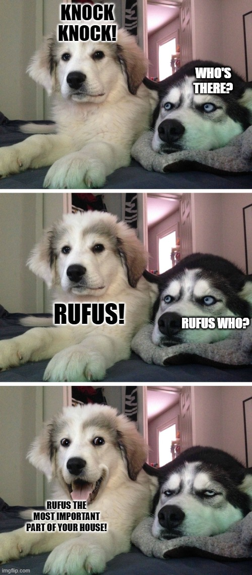Bad pun dogs |  KNOCK KNOCK! WHO'S THERE? RUFUS! RUFUS WHO? RUFUS THE MOST IMPORTANT PART OF YOUR HOUSE! | image tagged in bad pun dogs,bad joke,dog memes,bad pun,bad jokes,bad puns | made w/ Imgflip meme maker