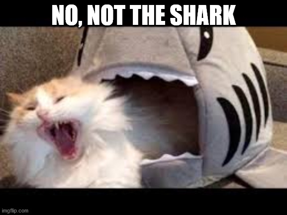 scared |  NO, NOT THE SHARK | image tagged in oh my god its here,cats | made w/ Imgflip meme maker