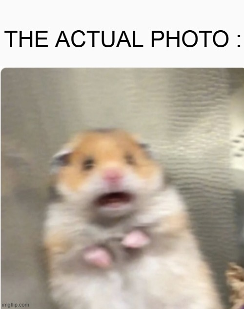 THE ACTUAL PHOTO : | image tagged in paniked hamster | made w/ Imgflip meme maker